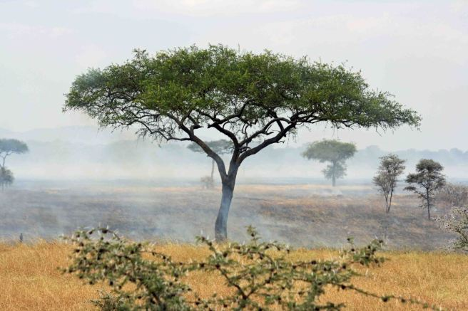 Grass fire on the Serengeti copy