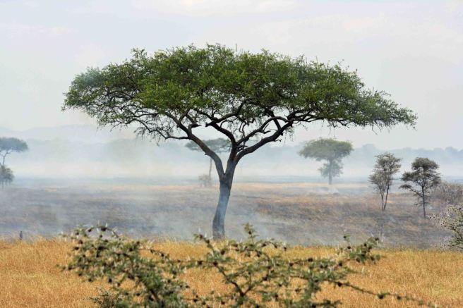 Grass fire on the Serengeti copy