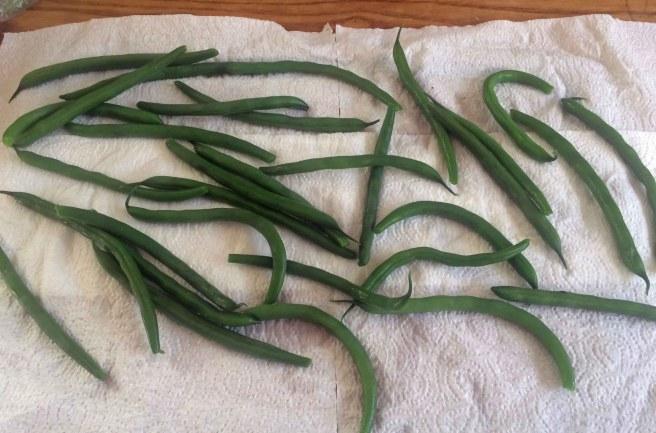 beans dry
