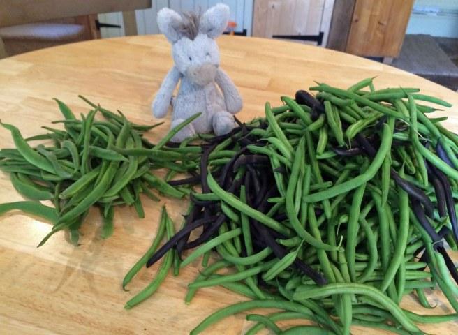 beans last